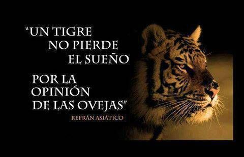 un tigre no pierde el sueño por la opinion de las ovejas